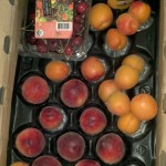 CSA Box filled with apricots, peaches, cherries, and a jar of peach conserve.