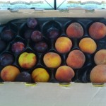 CSA Box with Peaches, Plums, and Nectarines