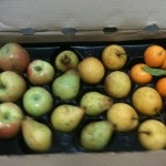 Apples, Pears, Citrus/Fall Winter CSA share