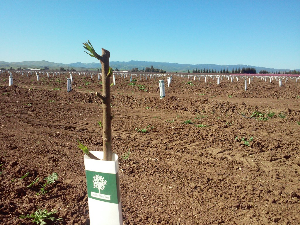 parcel planted on previously conventionally farmed land that we are converting to organic