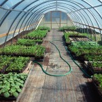 greenhouse with starts
