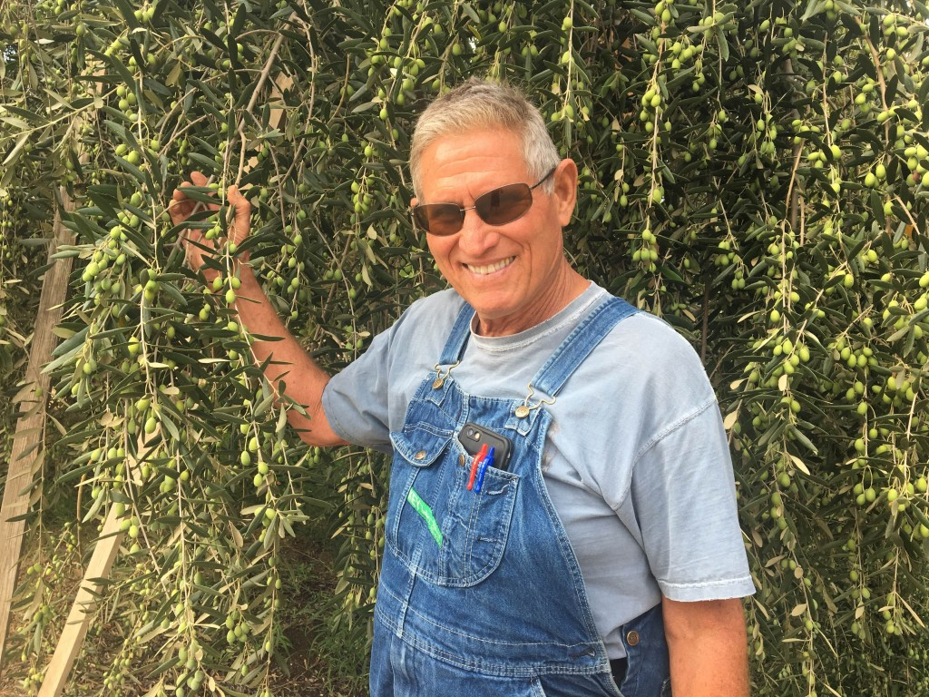 Farmer Al in the Olive Orchard