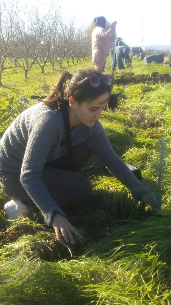 Kristin Planting our Hedgerow
