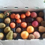 CSA box filled with clementines, oranges, kiwis, apples, and pears.