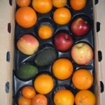 A citrus-heavy CSA box filled with oranges, tangerines, apples, and two avocados.