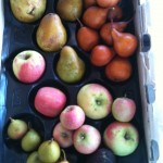 Pink Lady Apples, Bosc Pears, Seckle Pears, Warren Pears