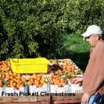 olsen_organic_farms_webpage002002