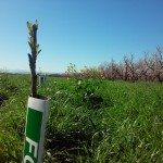 parcel planted on organically farmed acreage.