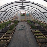 The Frog Hollow Green House